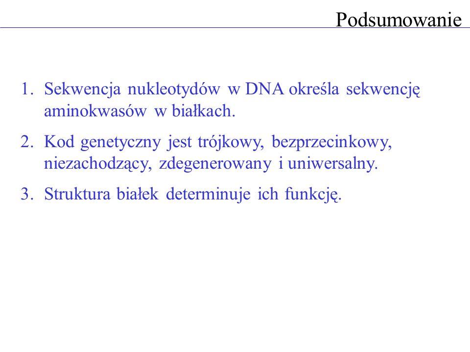Podsumowanie 1.Sekwencja nukleotydów w DNA określa sekwencję aminokwasów w białkach. 2.Kod genetyczny jest trójkowy, bezprzecinkowy, niezachodzący, zd