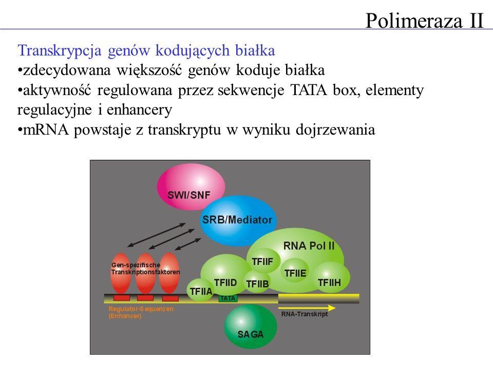 Transkrypcja genów kodujących białka zdecydowana większość genów koduje białka aktywność regulowana przez sekwencje TATA box, elementy regulacyjne i e