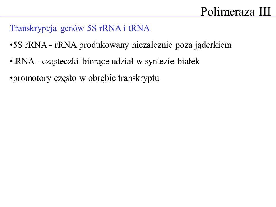 Transkrypcja genów 5S rRNA i tRNA 5S rRNA - rRNA produkowany niezaleznie poza jąderkiem tRNA - cząsteczki biorące udział w syntezie białek promotory c