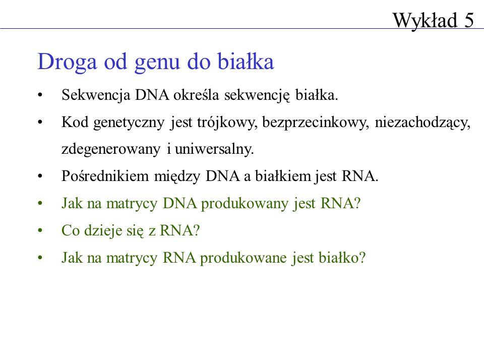 Droga od genu do białka Sekwencja DNA określa sekwencję białka. Kod genetyczny jest trójkowy, bezprzecinkowy, niezachodzący, zdegenerowany i uniwersal