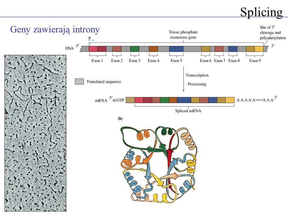 Splicing Geny zawierają introny