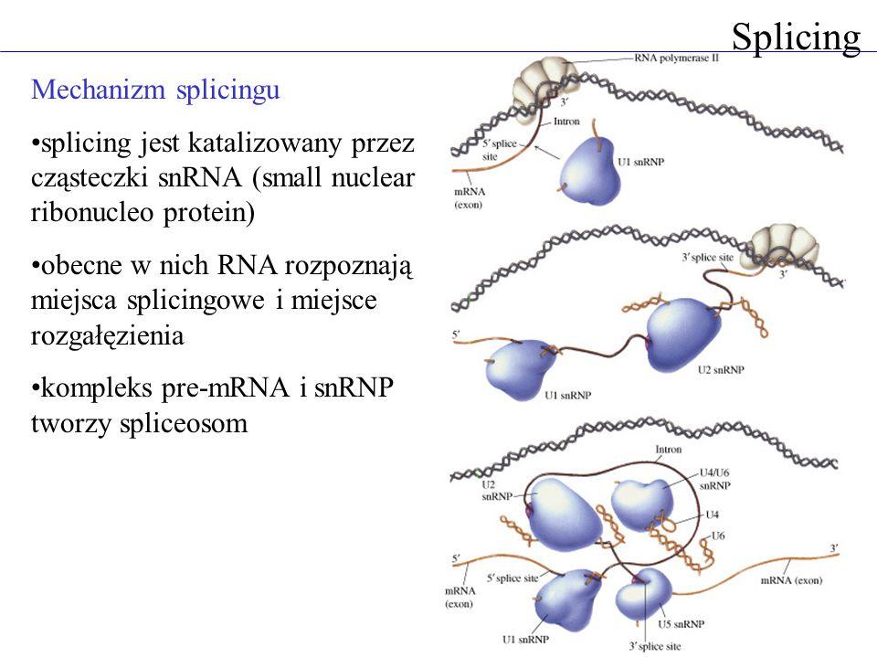 Splicing Mechanizm splicingu splicing jest katalizowany przez cząsteczki snRNA (small nuclear ribonucleo protein) obecne w nich RNA rozpoznają miejsca