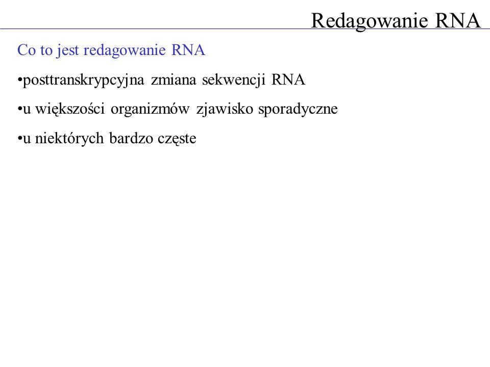 Redagowanie RNA Co to jest redagowanie RNA posttranskrypcyjna zmiana sekwencji RNA u większości organizmów zjawisko sporadyczne u niektórych bardzo cz