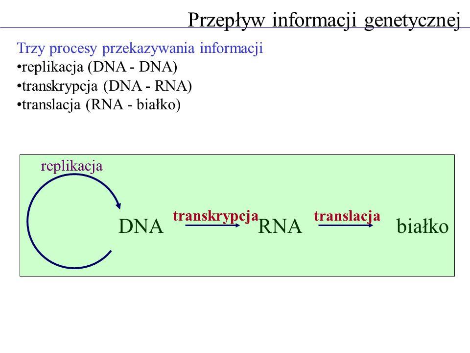 DNARNAbiałko replikacja transkrypcja translacja Przepływ informacji genetycznej Trzy procesy przekazywania informacji replikacja (DNA - DNA) transkryp