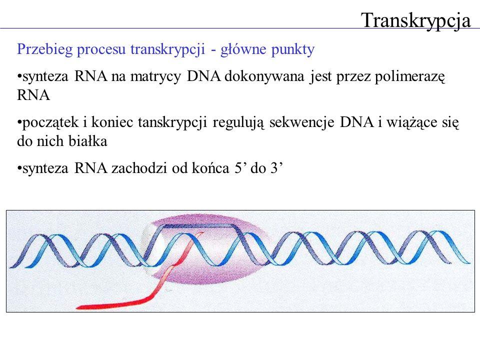Transkrypcja Przebieg procesu transkrypcji - główne punkty synteza RNA na matrycy DNA dokonywana jest przez polimerazę RNA początek i koniec tanskrypc