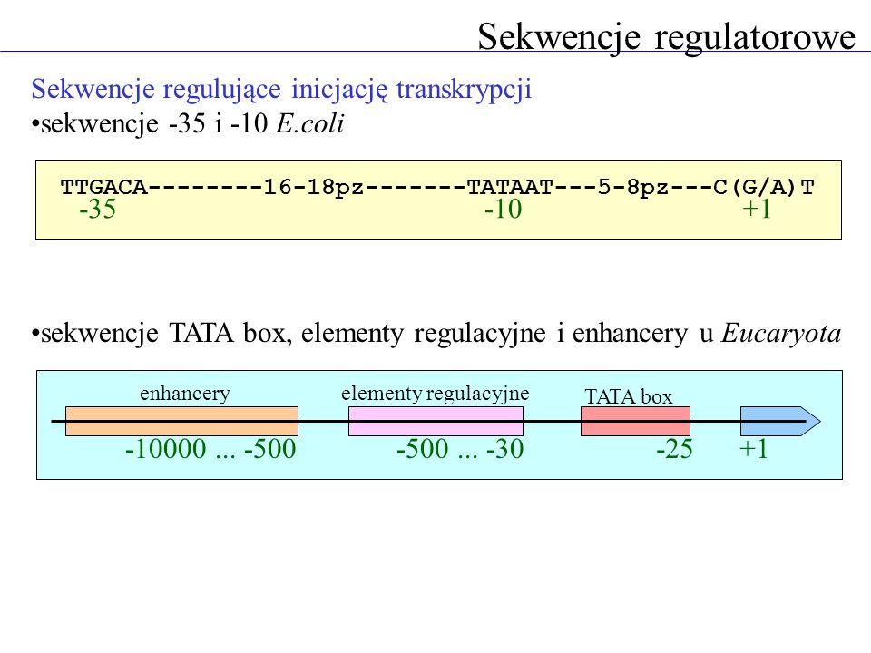 Sekwencje regulatorowe Sekwencje regulujące inicjację transkrypcji sekwencje -35 i -10 E.coli sekwencje TATA box, elementy regulacyjne i enhancery u E