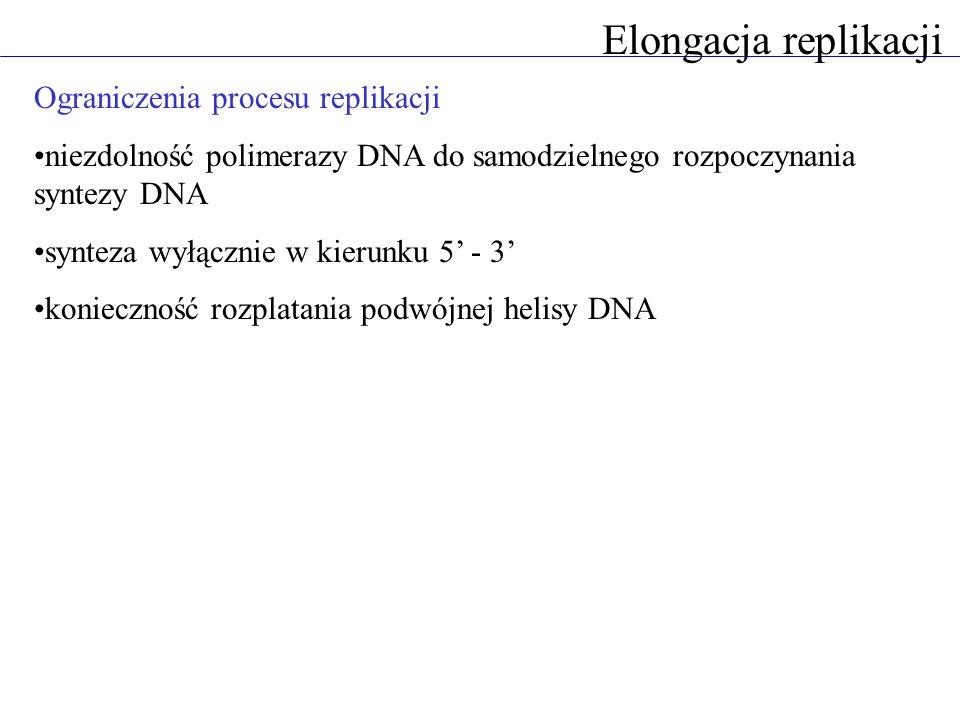 Elongacja replikacji Ograniczenia procesu replikacji niezdolność polimerazy DNA do samodzielnego rozpoczynania syntezy DNA synteza wyłącznie w kierunku 5 - 3 konieczność rozplatania podwójnej helisy DNA