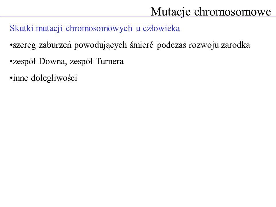 Mutacje chromosomowe Skutki mutacji chromosomowych u człowieka szereg zaburzeń powodujących śmierć podczas rozwoju zarodka zespół Downa, zespół Turnera inne dolegliwości