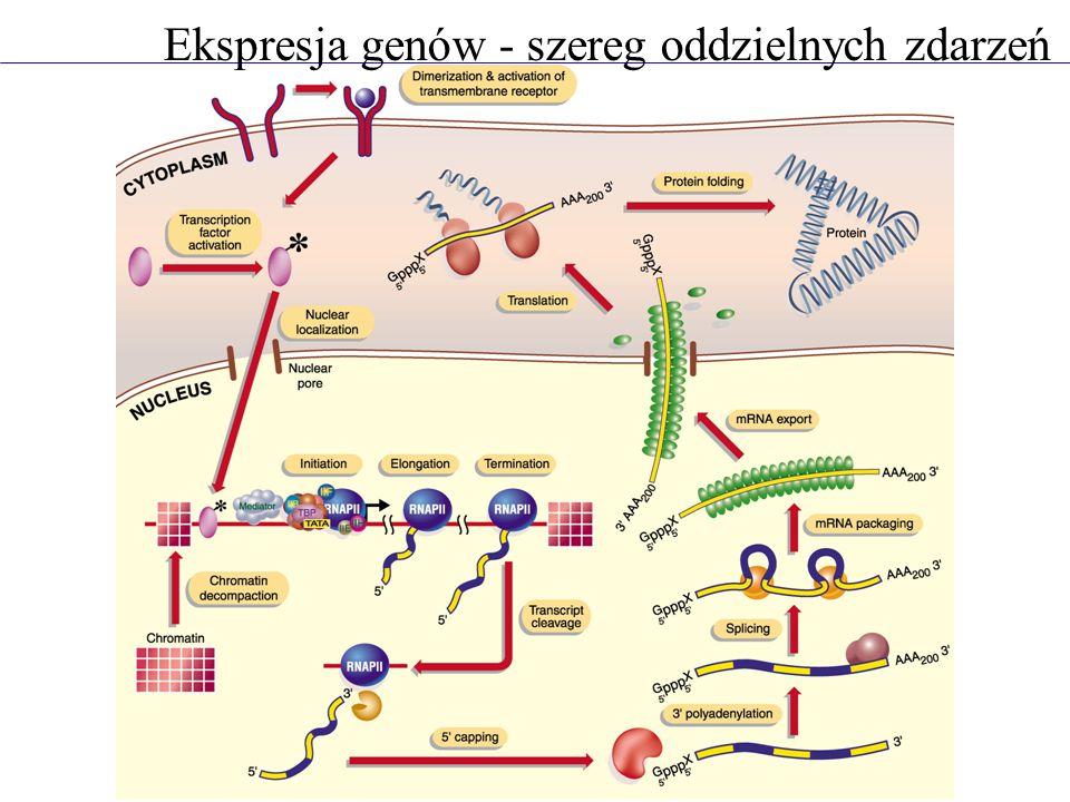 Ekspresja genów - szereg oddzielnych zdarzeń