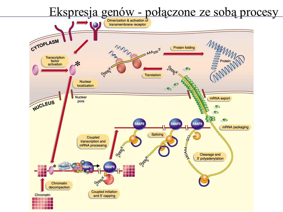 Ekspresja genów - połączone ze sobą procesy