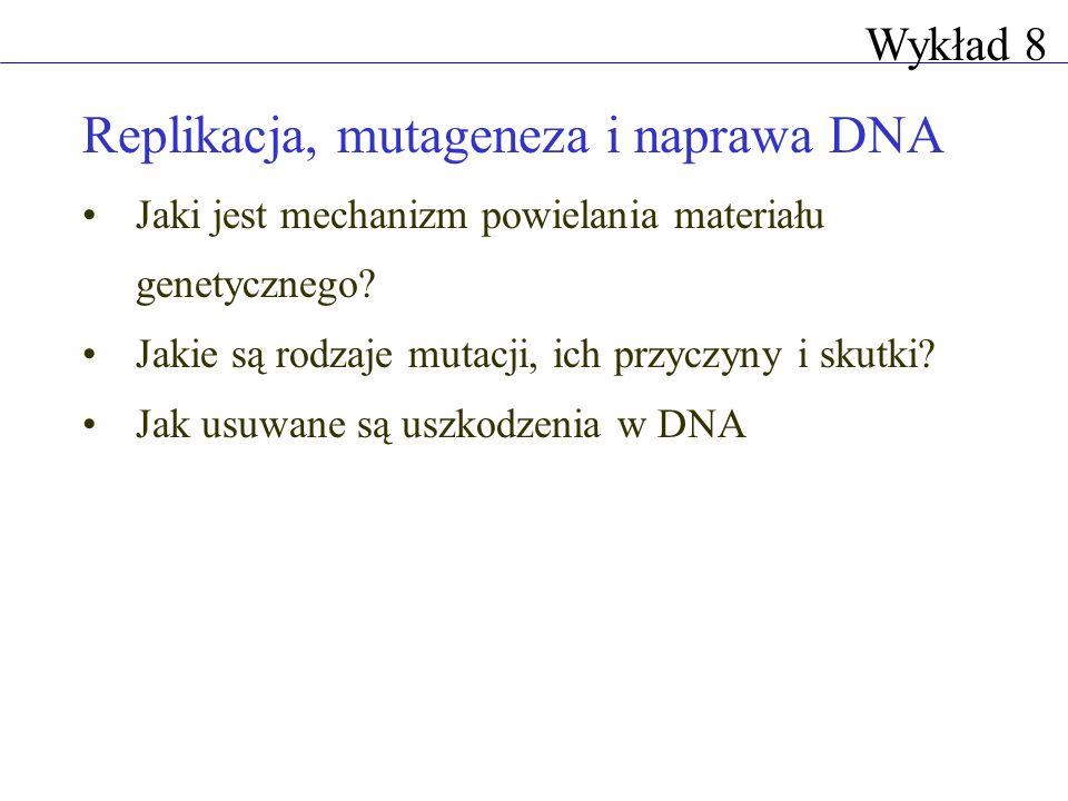 Terminacja replikacji Terminacja replikacji u bakterii jest regulowana sekwencje terminatorowe wiążące się do nich białko przepuszcza polimerazę DNA tylko w jednym kierunku