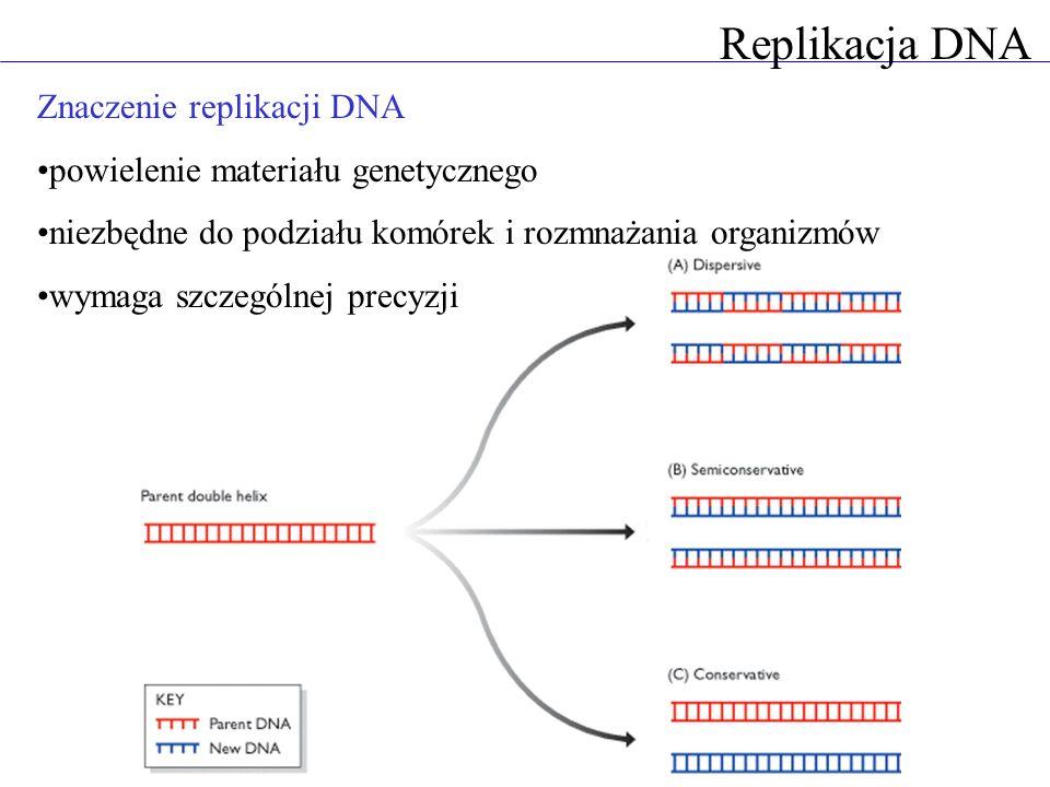 Replikacja DNA Znaczenie replikacji DNA powielenie materiału genetycznego niezbędne do podziału komórek i rozmnażania organizmów wymaga szczególnej precyzji