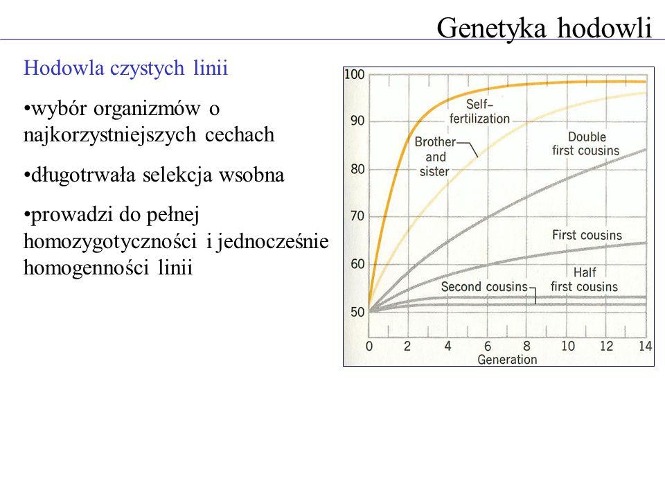 Hodowla czystych linii wybór organizmów o najkorzystniejszych cechach długotrwała selekcja wsobna prowadzi do pełnej homozygotyczności i jednocześnie