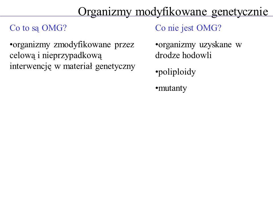 Co to są OMG? organizmy zmodyfikowane przez celową i nieprzypadkową interwencję w materiał genetyczny Organizmy modyfikowane genetycznie Co nie jest O