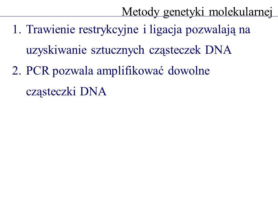 1.Trawienie restrykcyjne i ligacja pozwalają na uzyskiwanie sztucznych cząsteczek DNA 2.PCR pozwala amplifikować dowolne cząsteczki DNA Metody genetyk