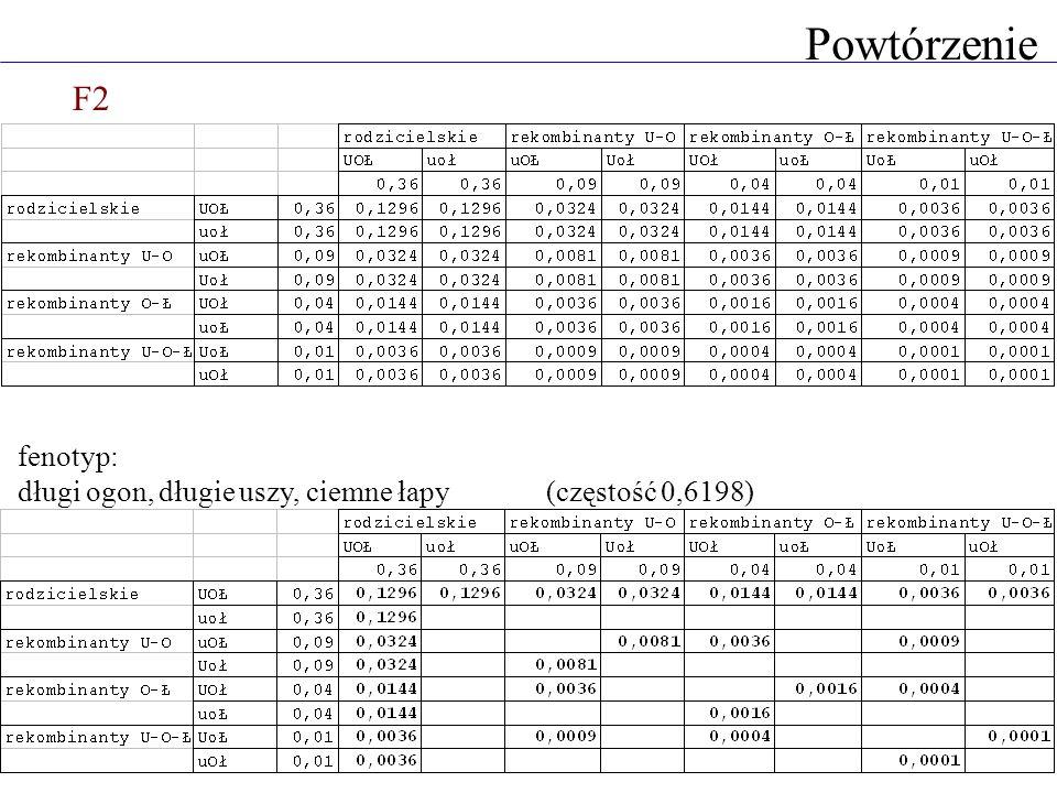 Powtórzenie F2 fenotyp: długi ogon, długie uszy, ciemne łapy(częstość 0,6198)