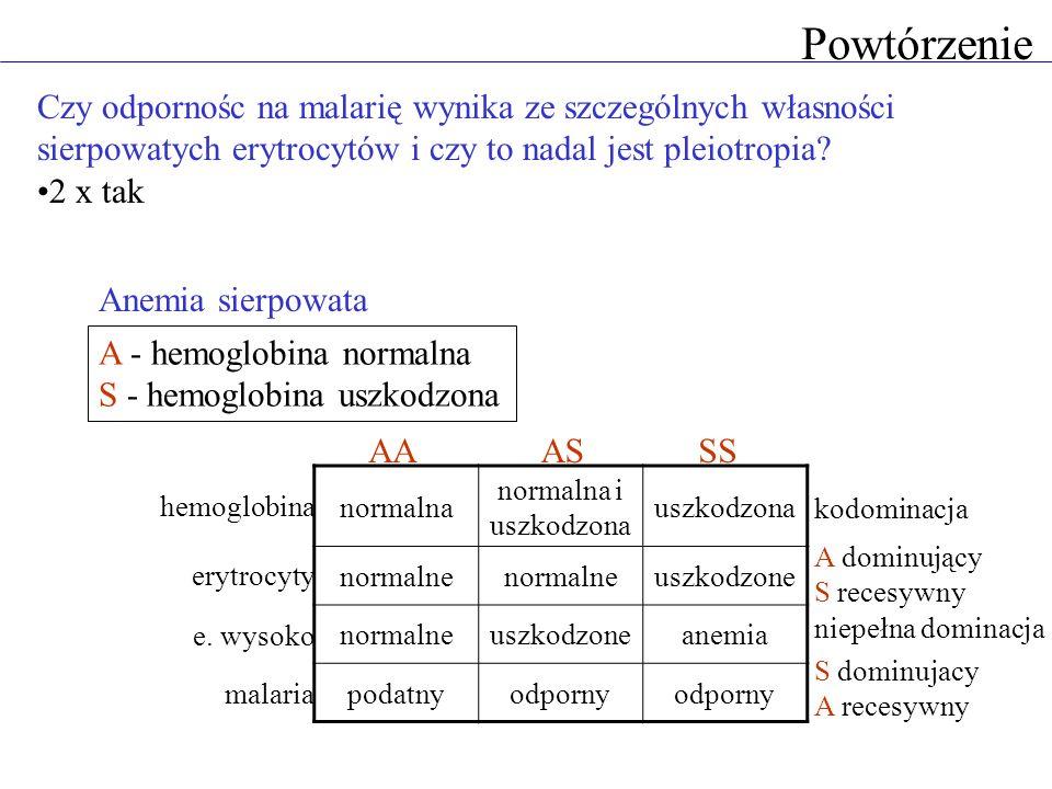 Powtórzenie Czy odpornośc na malarię wynika ze szczególnych własności sierpowatych erytrocytów i czy to nadal jest pleiotropia? 2 x tak normalna norma