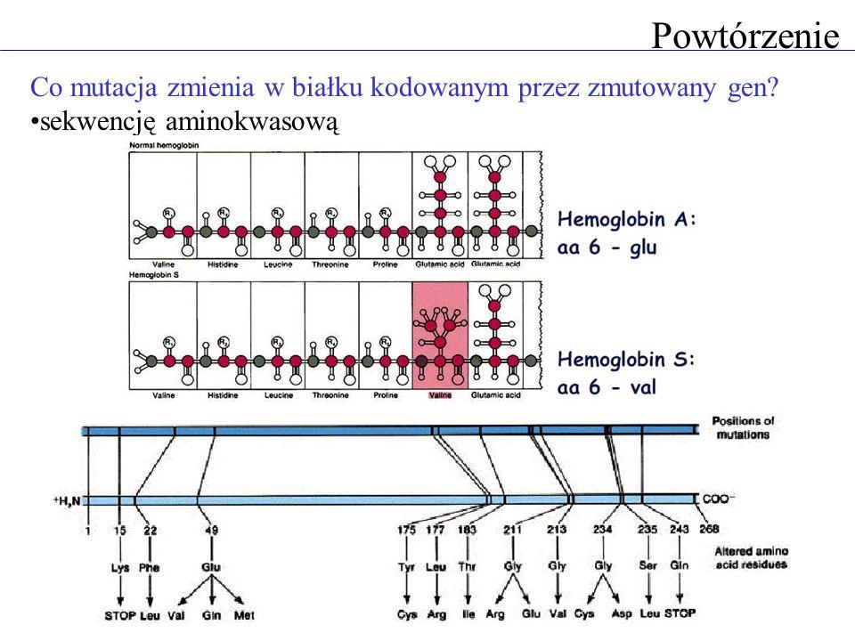 Powtórzenie Co mutacja zmienia w białku kodowanym przez zmutowany gen? sekwencję aminokwasową