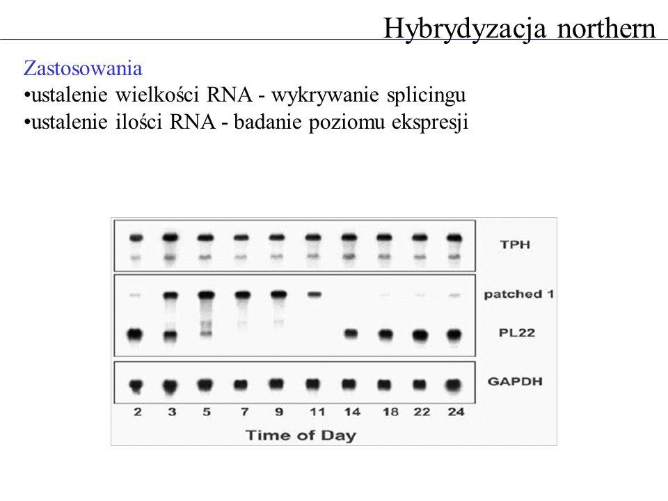 Zastosowania ustalenie wielkości RNA - wykrywanie splicingu ustalenie ilości RNA - badanie poziomu ekspresji Hybrydyzacja northern