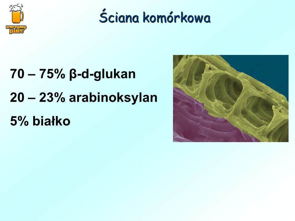 70 – 75% β-d-glukan 20 – 23% arabinoksylan 5% białko Ściana komórkowa