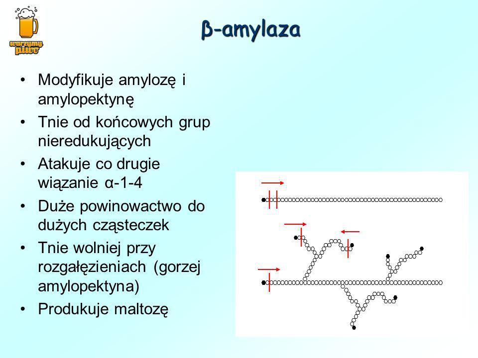 Modyfikuje amylozę i amylopektynę Tnie od końcowych grup nieredukujących Atakuje co drugie wiązanie α-1-4 Duże powinowactwo do dużych cząsteczek Tnie