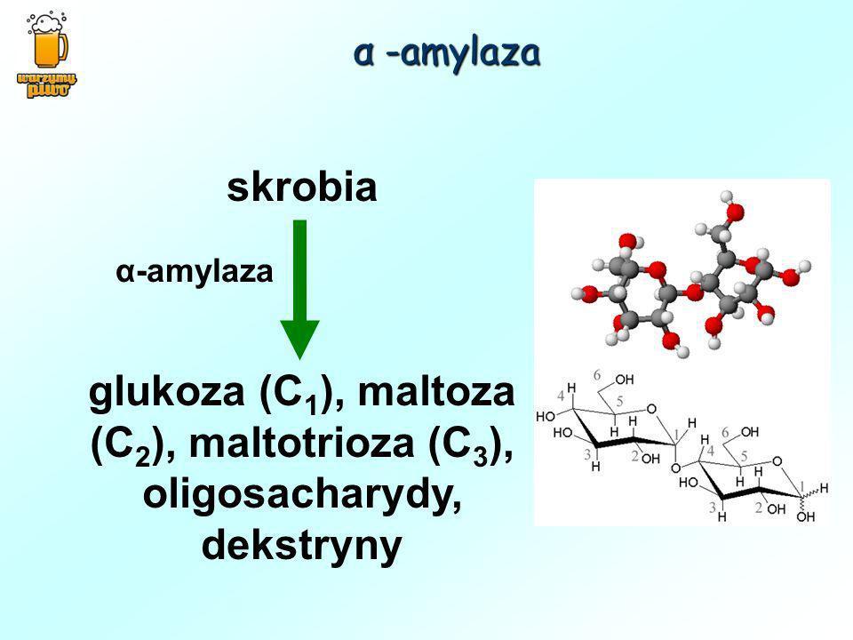 skrobia glukoza (C 1 ), maltoza (C 2 ), maltotrioza (C 3 ), oligosacharydy, dekstryny α -amylaza