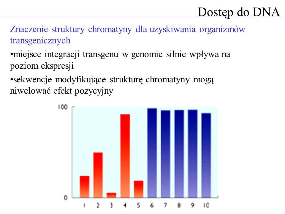 Dostęp do DNA Znaczenie struktury chromatyny dla uzyskiwania organizmów transgenicznych miejsce integracji transgenu w genomie silnie wpływa na poziom
