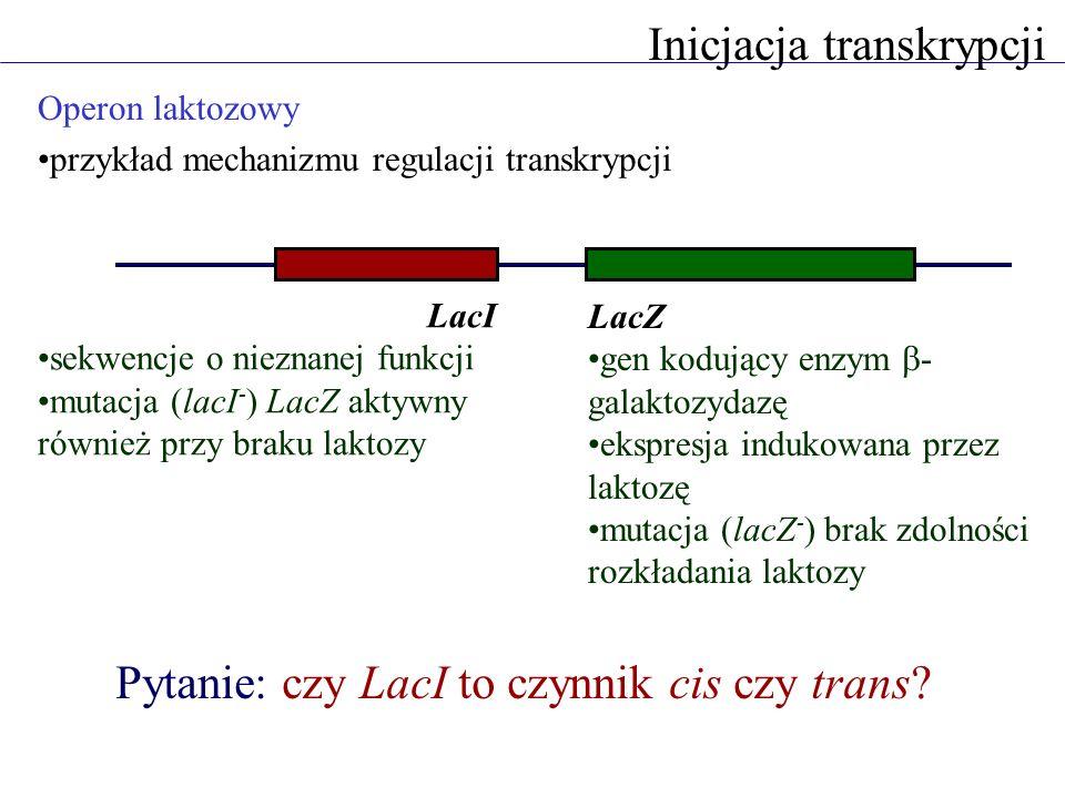 Inicjacja transkrypcji Operon laktozowy przykład mechanizmu regulacji transkrypcji LacI sekwencje o nieznanej funkcji mutacja (lacI - ) LacZ aktywny r