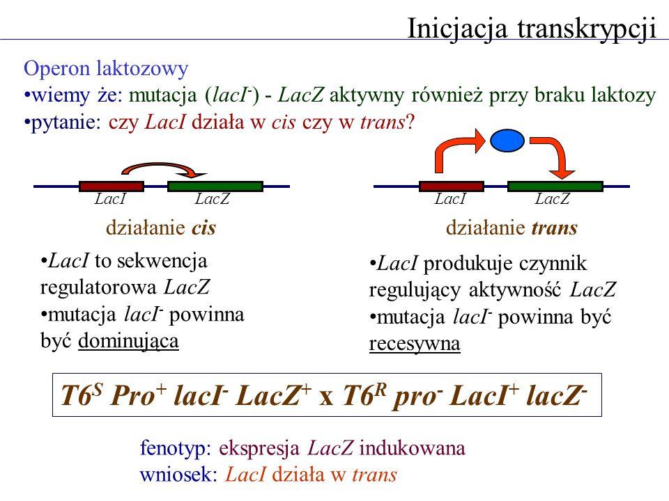 Inicjacja transkrypcji Operon laktozowy wiemy że: mutacja (lacI - ) - LacZ aktywny również przy braku laktozy pytanie: czy LacI działa w cis czy w tra