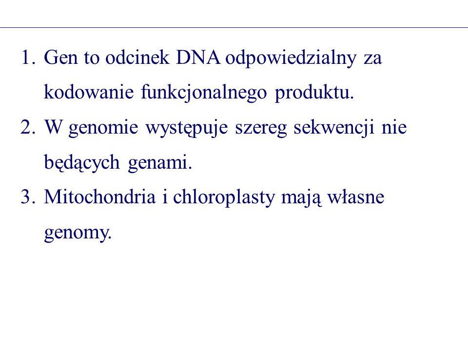 1.Gen to odcinek DNA odpowiedzialny za kodowanie funkcjonalnego produktu. 2.W genomie występuje szereg sekwencji nie będących genami. 3.Mitochondria i