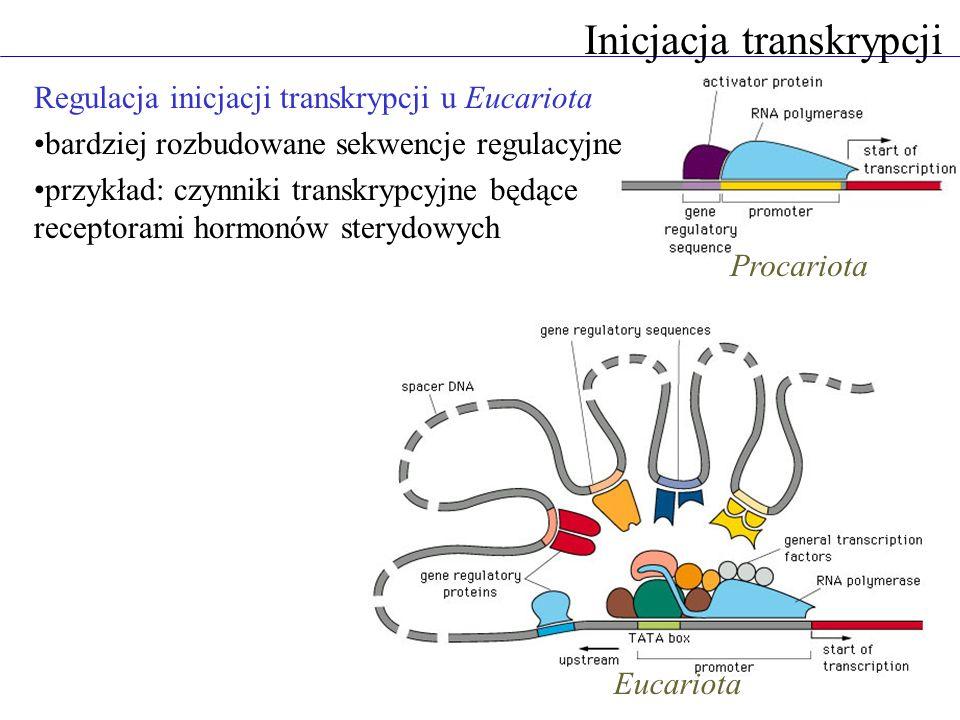 Inicjacja transkrypcji Regulacja inicjacji transkrypcji u Eucariota bardziej rozbudowane sekwencje regulacyjne przykład: czynniki transkrypcyjne będąc