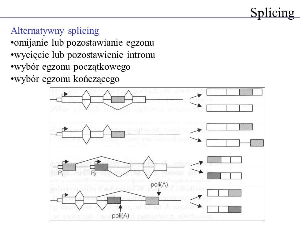 Splicing Alternatywny splicing omijanie lub pozostawianie egzonu wycięcie lub pozostawienie intronu wybór egzonu początkowego wybór egzonu kończącego
