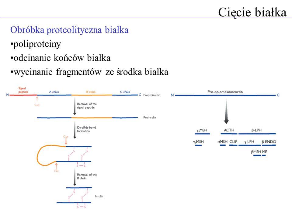 Cięcie białka Obróbka proteolityczna białka poliproteiny odcinanie końców białka wycinanie fragmentów ze środka białka