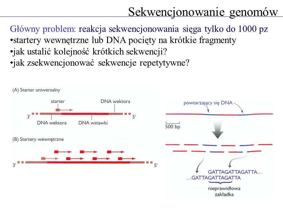 Sekwencjonowanie genomów Główny problem: reakcja sekwencjonowania sięga tylko do 1000 pz startery wewnętrzne lub DNA pocięty na krótkie fragmenty jak