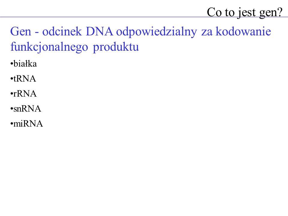 Co to jest gen? Gen - odcinek DNA odpowiedzialny za kodowanie funkcjonalnego produktu białka tRNA rRNA snRNA miRNA