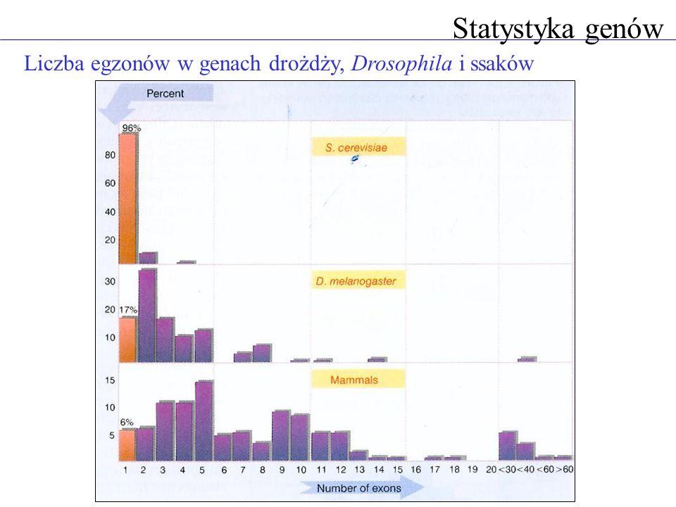 Liczba egzonów w genach drożdży, Drosophila i ssaków Statystyka genów