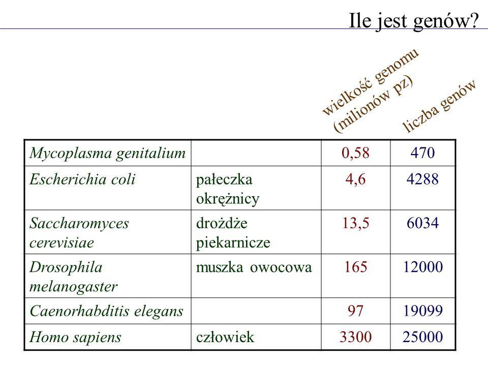 Ile jest genów? Mycoplasma genitalium0,58470 Escherichia colipałeczka okrężnicy 4,64288 Saccharomyces cerevisiae drożdże piekarnicze 13,56034 Drosophi