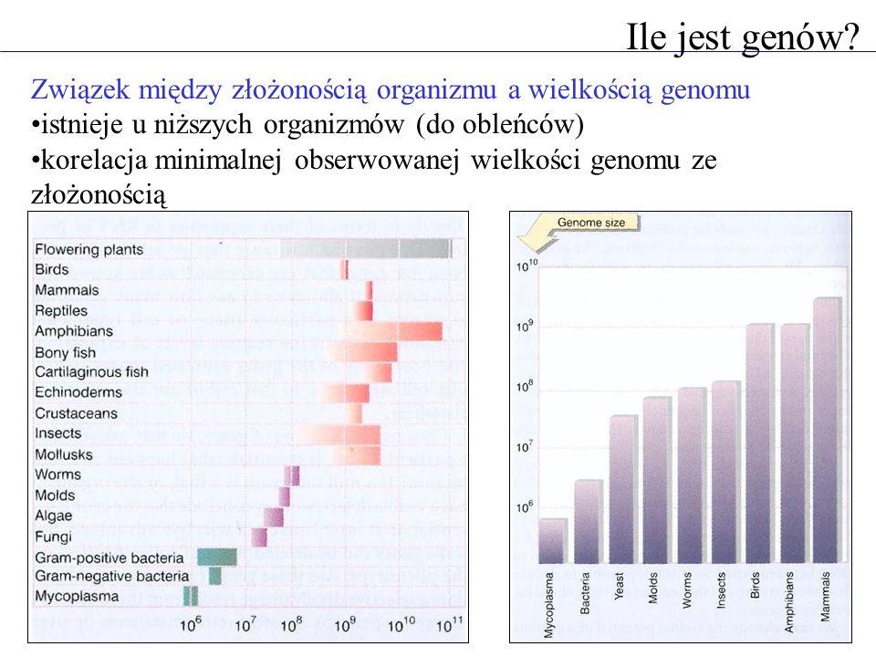 Ile jest genów? Związek między złożonością organizmu a wielkością genomu istnieje u niższych organizmów (do obleńców) korelacja minimalnej obserwowane