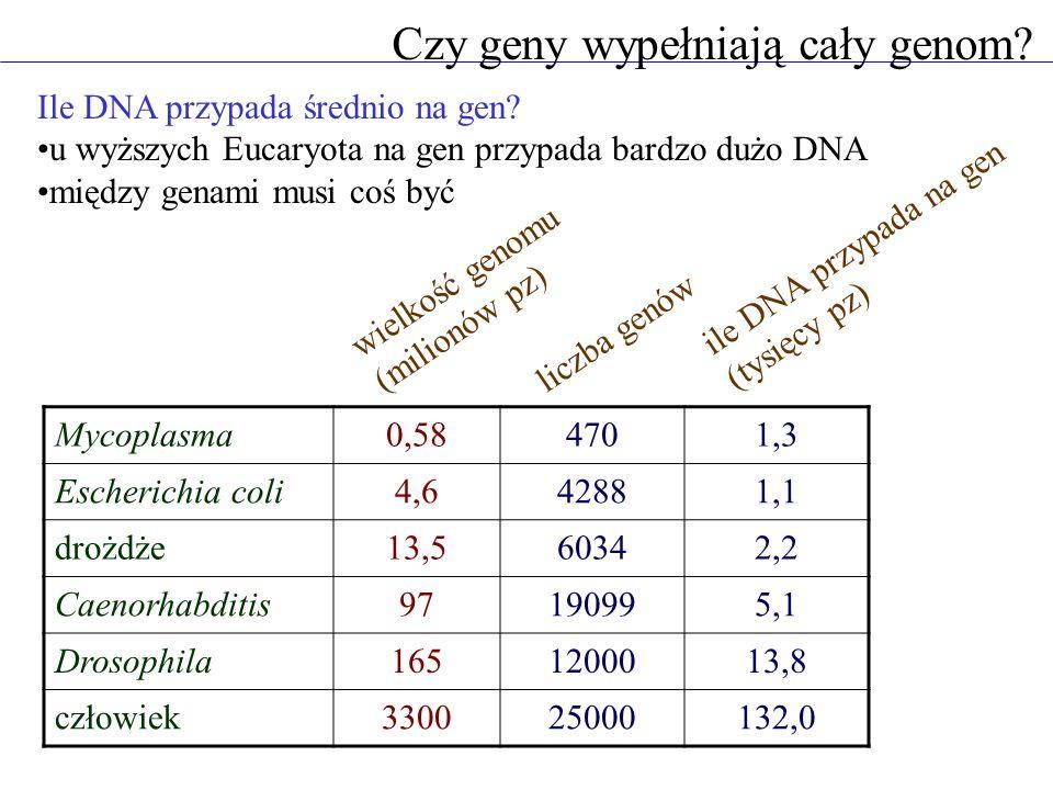 Czy geny wypełniają cały genom? Ile DNA przypada średnio na gen? u wyższych Eucaryota na gen przypada bardzo dużo DNA między genami musi coś być Mycop