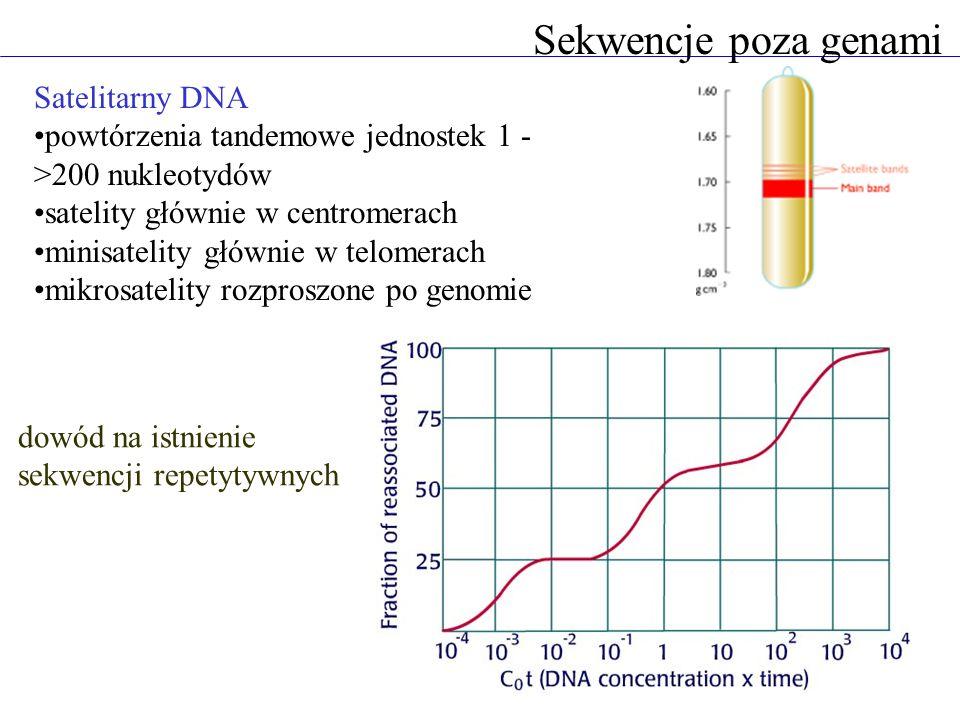 Sekwencje poza genami Satelitarny DNA powtórzenia tandemowe jednostek 1 - >200 nukleotydów satelity głównie w centromerach minisatelity głównie w telo