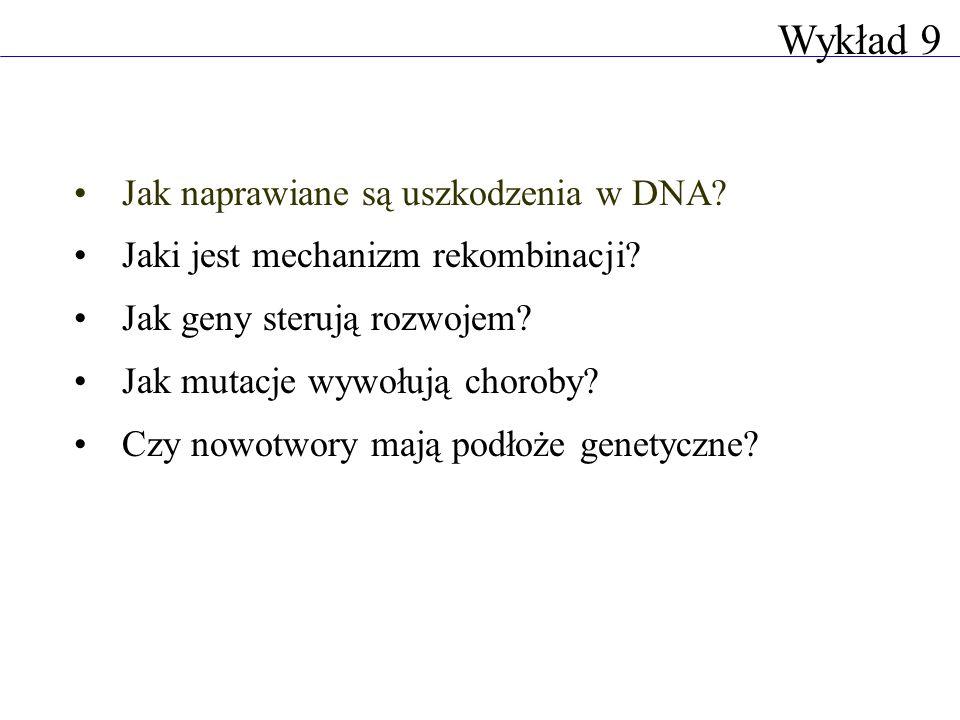 Jak naprawiane są uszkodzenia w DNA? Jaki jest mechanizm rekombinacji? Jak geny sterują rozwojem? Jak mutacje wywołują choroby? Czy nowotwory mają pod