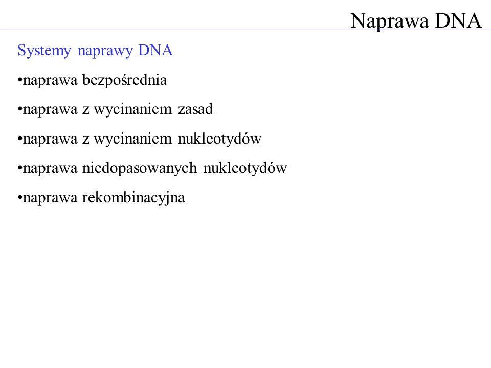 Naprawa DNA Systemy naprawy DNA naprawa bezpośrednia naprawa z wycinaniem zasad naprawa z wycinaniem nukleotydów naprawa niedopasowanych nukleotydów n