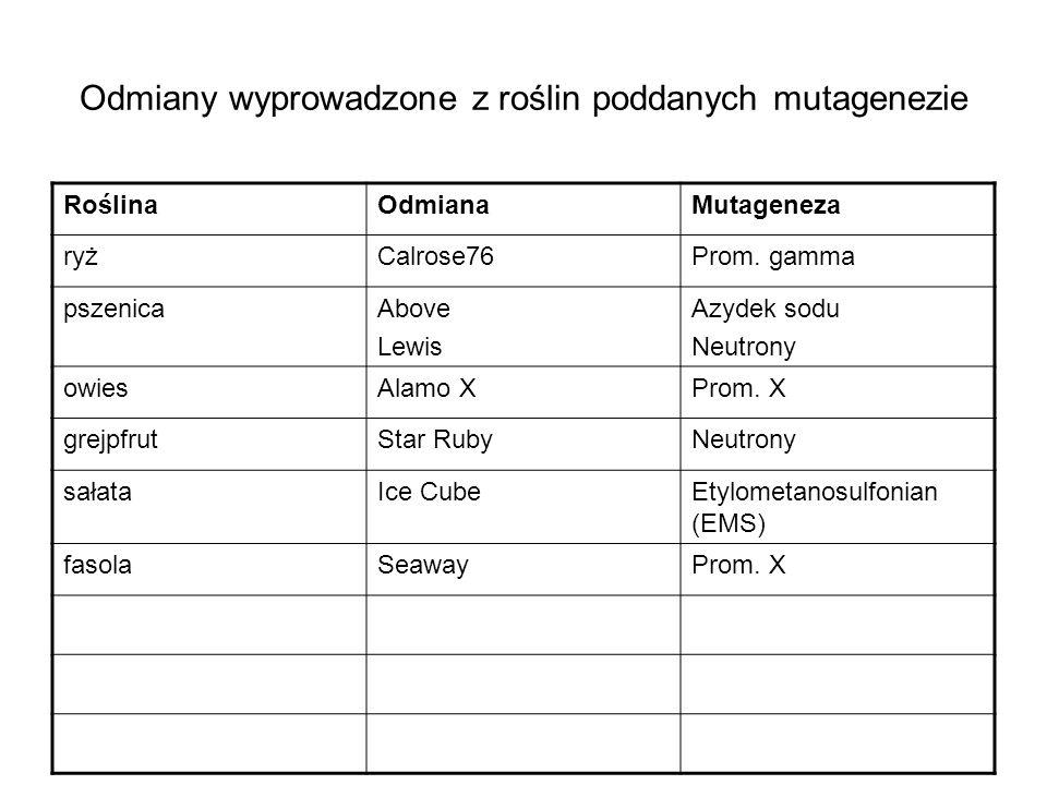 Odmiany wyprowadzone z roślin poddanych mutagenezie RoślinaOdmianaMutageneza ryżCalrose76Prom. gamma pszenicaAbove Lewis Azydek sodu Neutrony owiesAla