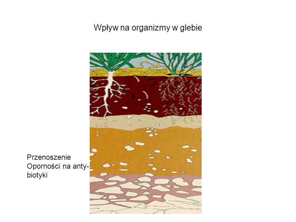 Wpływ na organizmy w glebie Przenoszenie Oporności na anty- biotyki
