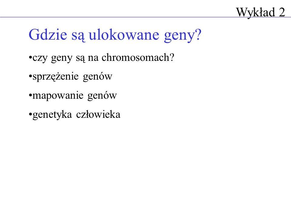 Wykład 2 Gdzie są ulokowane geny? czy geny są na chromosomach? sprzężenie genów mapowanie genów genetyka człowieka