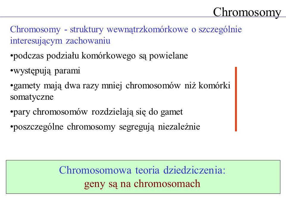 Chromosomy Chromosomy - struktury wewnątrzkomórkowe o szczególnie interesującym zachowaniu podczas podziału komórkowego są powielane występują parami
