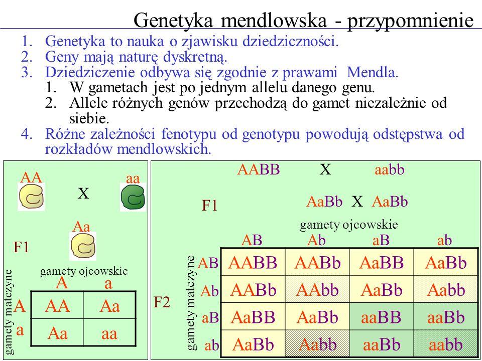 Genetyka mendlowska - przypomnienie 1.Genetyka to nauka o zjawisku dziedziczności. 2.Geny mają naturę dyskretną. 3.Dziedziczenie odbywa się zgodnie z