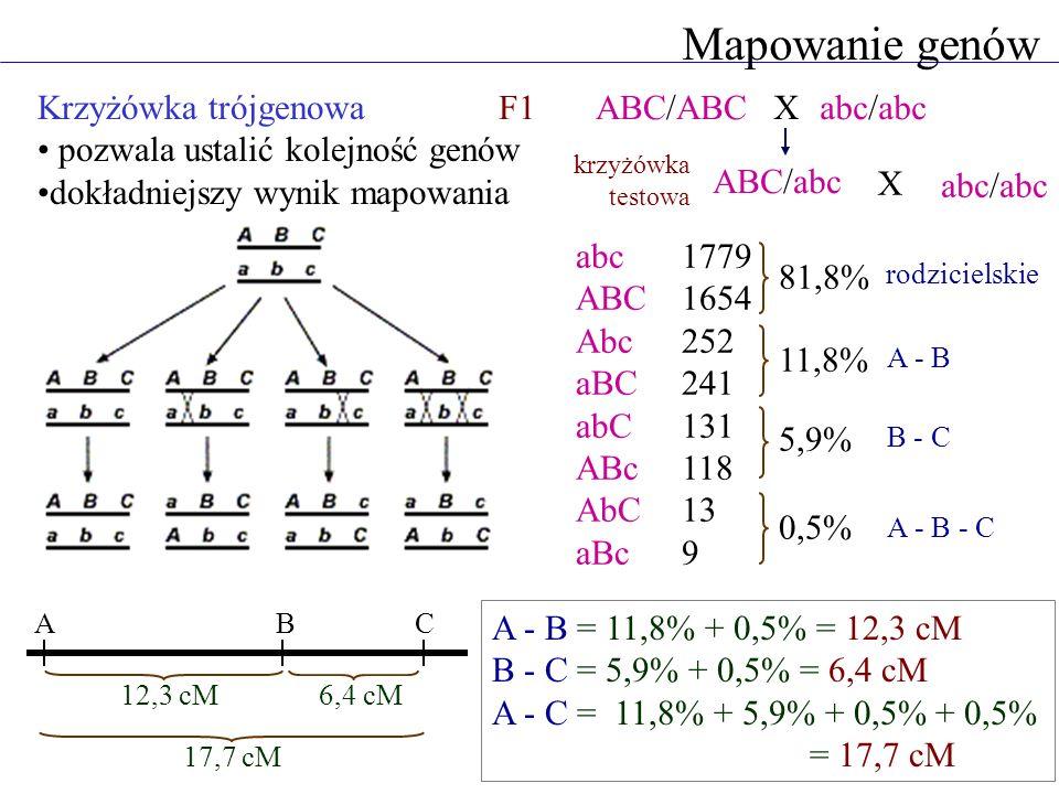 Mapowanie genów Krzyżówka trójgenowa pozwala ustalić kolejność genów dokładniejszy wynik mapowania ABC/ABCabc/abc ABC/abc abc/abc abc1779 ABC1654 Abc2
