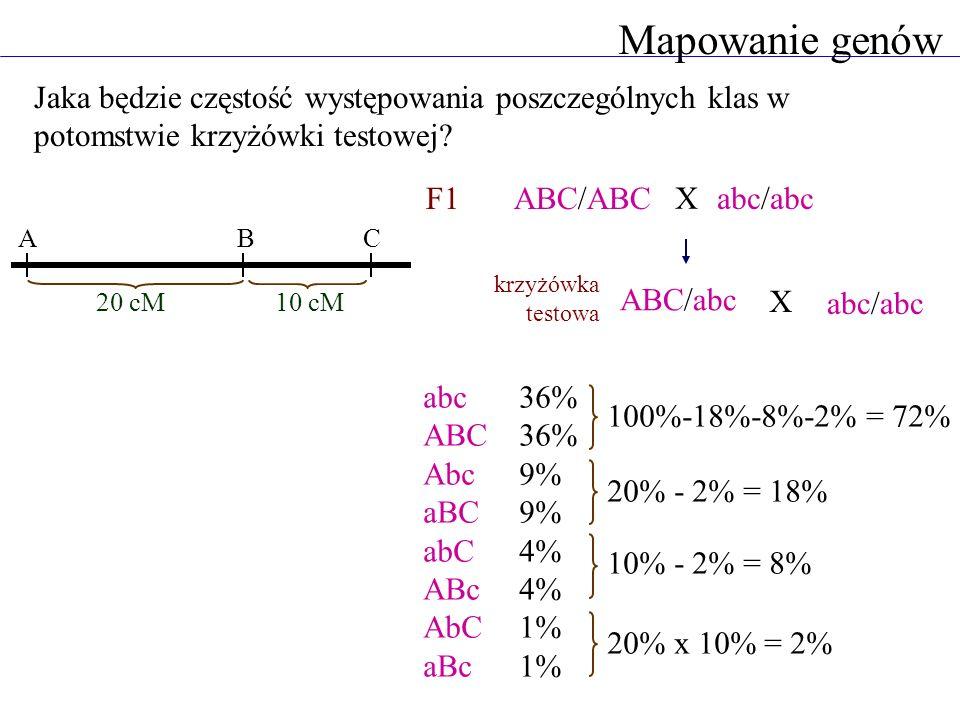 Mapowanie genów Jaka będzie częstość występowania poszczególnych klas w potomstwie krzyżówki testowej? ABC/ABCabc/abc ABC/abc abc/abc abc36% ABC36% Ab