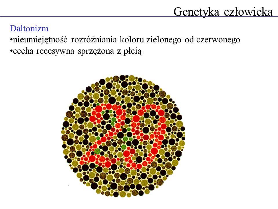 Genetyka człowieka Daltonizm nieumiejętność rozróżniania koloru zielonego od czerwonego cecha recesywna sprzężona z płcią